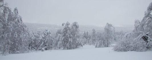 Конно-санный тур 'Снежный Крака' - 5 дней.
